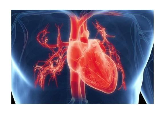 심장의 기능을 개선시키는 습관 및 영양소