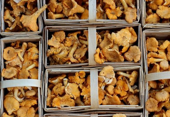 면역력증강  항암  항바이러스작용 등의 효과가 입증된 표고 버섯균사체 추출물 AHCC