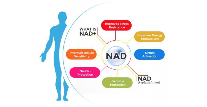 회춘영양제, 노화방지제의 물질인 니코틴아미드 리보사이드 NAD 부스터 트루니아젠