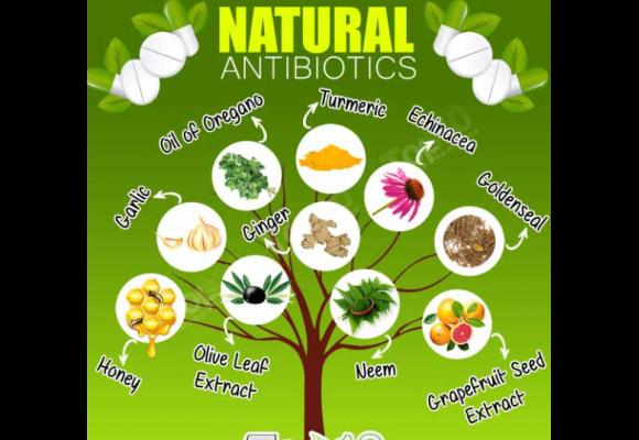 바이러스와 세균을 이기는 천연 항생물질로 겨울 독감 걱정 덜어볼까