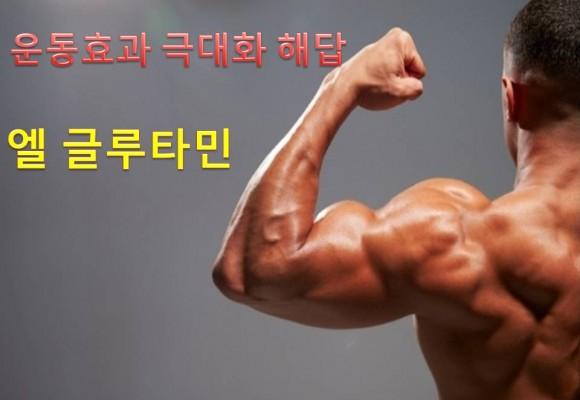근육 보양식 엘 글루타민(L-GLUTAMINE) 보충제에 대한 모든 것