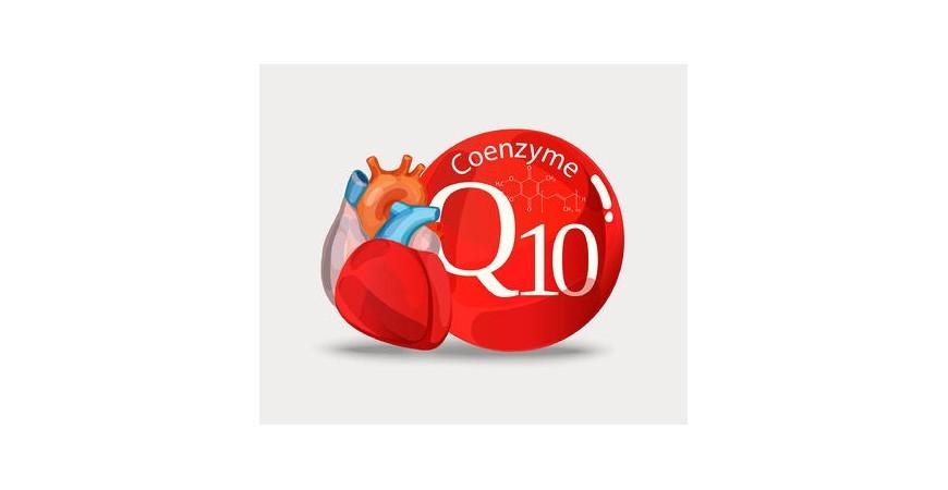 에너지 생성, 항산화 효능 뛰어난 코큐텐(CoQ10)